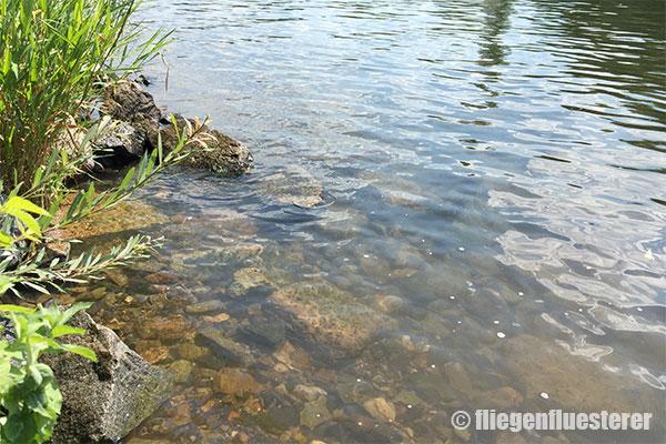 Typische Stelle für Friedfische am Main